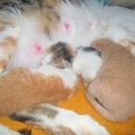 Kedilerde Kısırlaştırma Hakkındaki Tüm Sorular