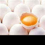 Protein Çeşitleri Nelerdir?