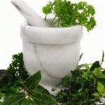 Şifalı bitkiler ve faydaları nelerdir ?