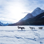 5 Winter-Must Do's in den Rocky Mountains