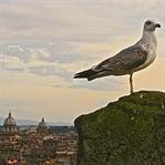 7 Gründe für eine Rom-Winterreise