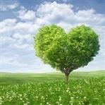Bilgi | Doğayı Seven Ambalaj