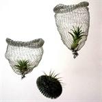 DIY Airplanting | Schwebende Objekte selber machen