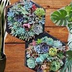 Frische Deko: Die schönsten Pflanzen für deine Woh