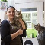 Katzencafé Klagenfurt: Ein Ort, wo alle lächeln