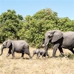 Namibia: 10 Orte, die ihr unbedingt besuchen müsst