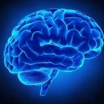 İnsan Beyni Hakkında Ufuk Açan 14 Bilgi