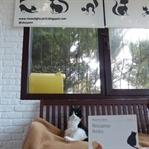 Ressamın Kedisi - Mustafa Balel