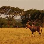 Swasiland - ein Königreich voller Kuriositäten