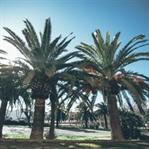 Auf der Suche nach Sonne - Mallorca im Frühling