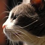 Bir Sokak Kedisi Tüm Hayatınızı Değiştirebilir Mi?