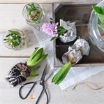 DIY-Dekoideen mit Blumenzwiebeln