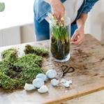 DIY Frühlingsdeko mit Moos und Hyazinthen