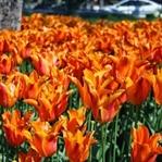 Hoş Geldin İlkbahar..!