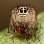 Örümceklerle İlgili Şaşırtan Bilgi İnanamıcaksınız