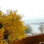 İstanbul'da Dört Mevsim No:2 Adalar Mimoza Zamanı