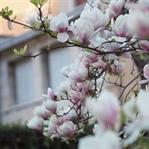 Top 5 City Trips im Frühling