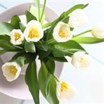 Weiße Tulpen...