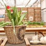 10 tolle Ideen für Tulpen!
