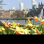 Den Haag: Top 5 Hangouts