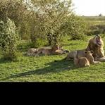 Fotoreise durch das Land der Massai