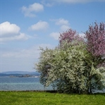 Frühling klopft am Bodensee an