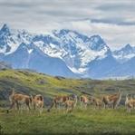 Glamping mit Traumkulisse in Patagonien