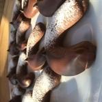 Kahveli Bisküvi Kurabiye
