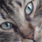 Kedi Belgeseli Youtube Tarafından Satın Alındı!