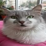 """""""Kedi""""sel 10 Sır"""