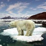 İklim Değişikliği ve Fırsatlar