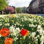 (M)ein Tag in Koblenz
