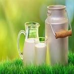 Manda Sütü ve Manda Yoğurdu Faydaları