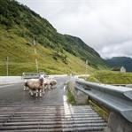 Norwegen Roadtrip – 5 malerische Routen
