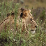 Safari in Südafrika | Gondwana Game Reserve