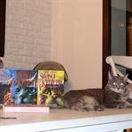 Savaşçı Kediler Serisi