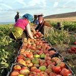 Tarım Kredisi Nedir ve Kimlere Verilmektedir?