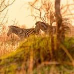 Afrika Rundreise Namibia, Botswana, Sambia