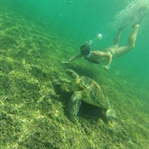 Akumal Mexico: Snorkel with sea turtles for free