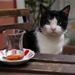 Kedi Pek Yakında Geliyor!