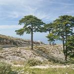 Llogara-Pass: Aussicht bis nach Griechenland