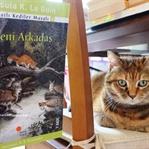 Okuma Halleri,Fotoğraflarla*Kanatlı Kediler Masalı