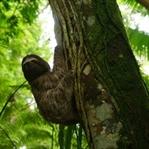 Photo-Essay: Wildlife Costa Rica