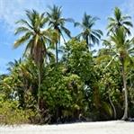Reisetipps Costa Rica – Dem Dschungel so nah
