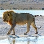 Safari in Namibia - der Etosha Nationalpark