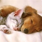 Evcil Hayvan Sahibi Olmak İçin Hazır Mısınız?