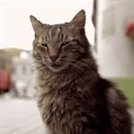 Anlatı-yorum : Kedi