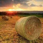 Artık Herkesin Bir Çiftliği Olacak