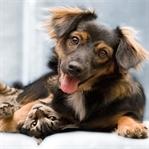 Bir Evcil Hayvanla Yaşamanın Altı Avantajı