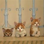 Film Tanıtımı: Kedi (2016)
